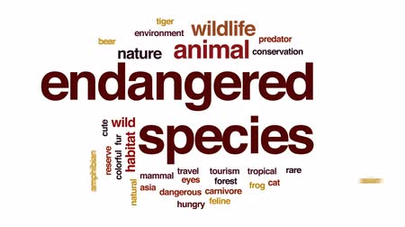 ropucha : Endangered species animated word cloud, text design animation.