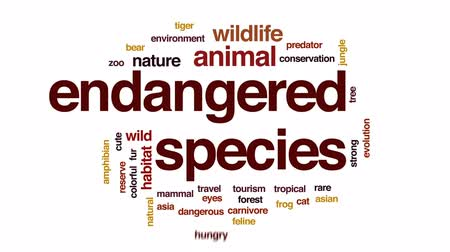 tree frog : Endangered species animated word cloud, text design animation.
