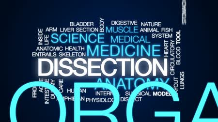 toad : Dissection animated word cloud, text design animation. Stock Footage