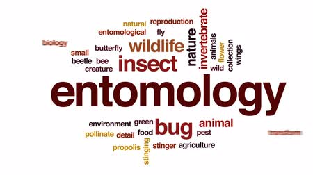 cocoon : Entomology animated word cloud, text design animation. Stock Footage