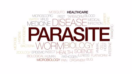 паразитный : Parasite animated word cloud, text design animation. Kinetic typography.
