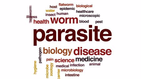 komar : Parasite animated word cloud, text design animation.