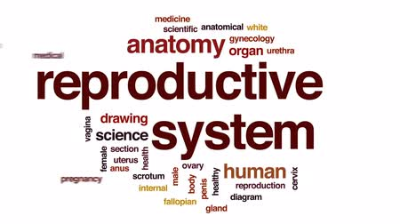 interno : Reproductive system animated word cloud, text design animation. Vídeos