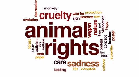cruelty : Animal rights animated word cloud, text design animation.