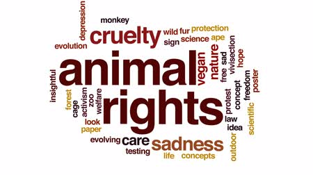 animal welfare : Animal rights animated word cloud, text design animation.