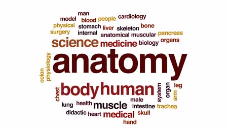 interno : Anatomy animated word cloud, text design animation. Vídeos