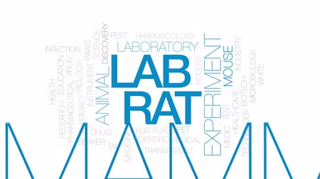 mysz : Lab rat animated word cloud, text design animation. Kinetic typography.