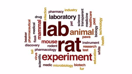 animal paws : Lab rat animated word cloud, text design animation. Stock Footage