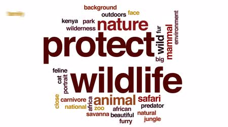 kotki : Protect wildlife animated word cloud, text design animation.