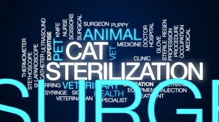 weterynarz : Cat sterilization animated word cloud, text design animation. Wideo