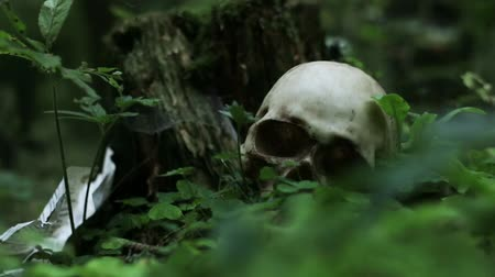 alfa : Skull in the forest