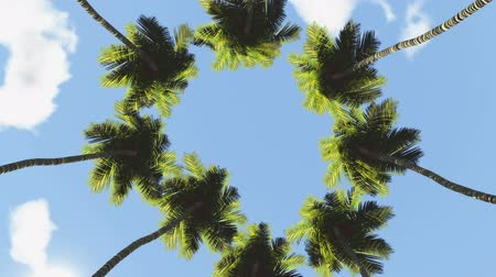 silhouettes of palms rotate on blue sky with clouds Stock Footage
