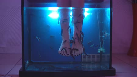 garra : Legs of young girl in an aquarium with fish - special healing therapy Stock Footage