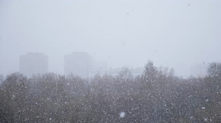 první : Snow falling, flakes swirling and drifting against a backdrop of trees with snow covered branches.