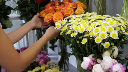 self storage : Professional floristry studio and shop. Woman florist takes care of flowers chamomile. Beautiful flowers different colours and sort. Stock Footage