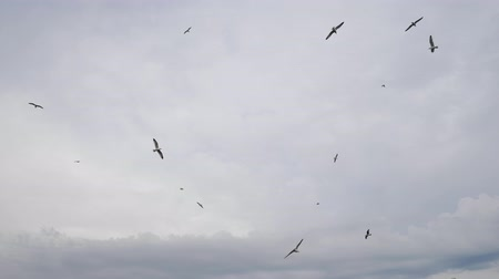 high rises : white birds flock flies high in sky covered with clouds waving wings over seashore on summer day Stock Footage