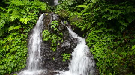 floresta tropical : Falls in jungle on island Bali  Stock Footage