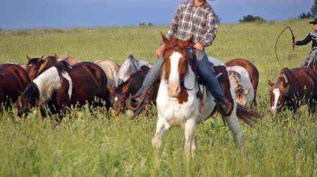 cavalinho : Two cowboys drive herd of horses across the field