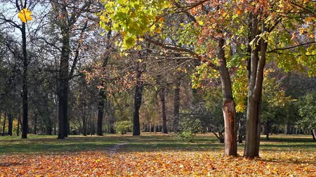 autumn : Beautiful park in sunny autumn day