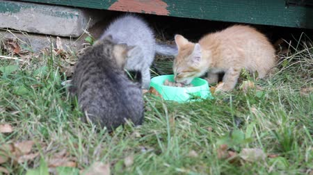 hides : Street kittens eat a forage from the bowl standing on a grass