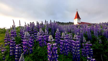 lupine : Great view of Vikurkirkja christian church. Dramatic and picturesque scene. Popular tourist attraction. Location place Vik i Myrdal village, Iceland, Europe. Beauty world. Shooting in HD 1080 video. Stock Footage