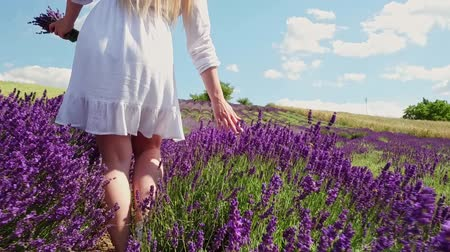 herbal : Hippie girl walking in lavender field, summer freedom concept