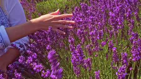 armoni : Girl touching lavender bush on the field, summer freedom concept Stok Video