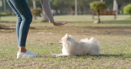 um : Woman training with her dog in the park