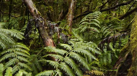 idílio : Ferns and mosses in the humid rainforest