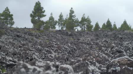 liken : Desert landscape of a cooled lava covered with moss and lichen