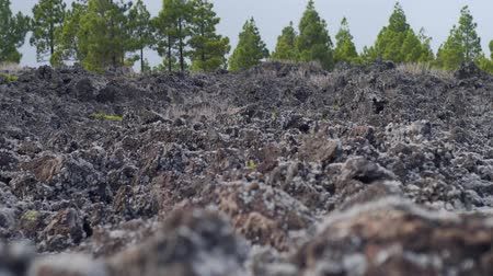 liken : wet volcanic lava overgrown with moss and lichen Stok Video