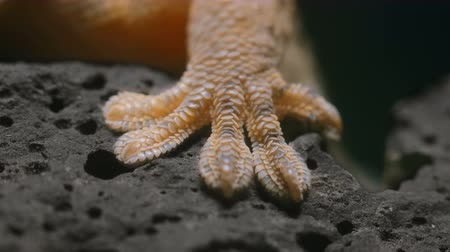 stealth : Macro Video Geckos Foot