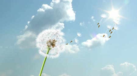 саженцы : Dandelion, 3d animation on time-lapsed sky background