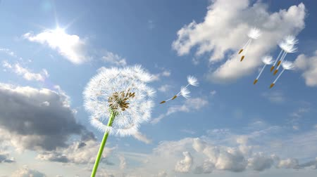 dmuchawiec : Dandelion, 3d animation against sky background (time-lapse)