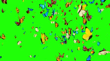 polinização : Butterflies Flying on a Green Background. 3d animation, 4K