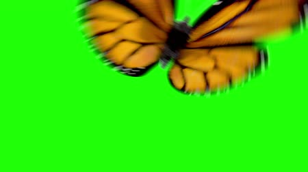 isolado no branco : Butterflies Flying on a Green Background. Beautiful 3d animation, Six Options. 4K