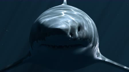 korkunç : Great White Shark Megalodon in the Dark Depth. 3d animation 4K