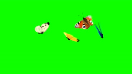 hdtv : Four Butterflies Fly on a Green Background. Two Beautiful 3d Animations. 4K Ultra HD 3840x2160