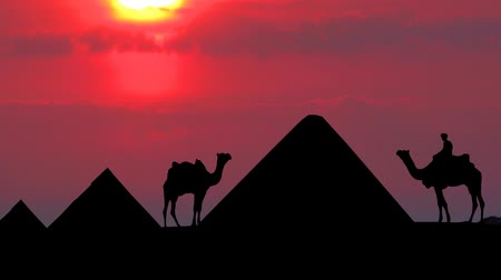 egyiptomi : Purple sunset with the Egyptian pyramids and camels.