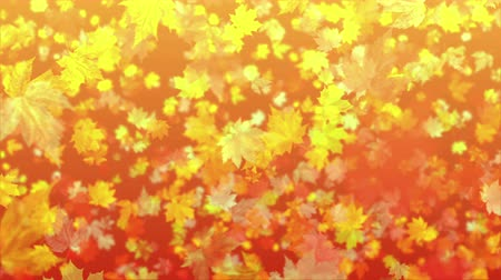 4k Autumn Leaf Fall Background DOF Wideo
