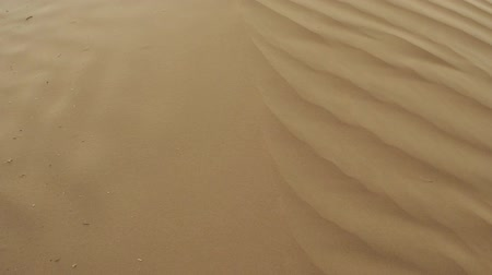 lifeless : Sand in the desert. Abstract dune background. The wavy texture of the sand.
