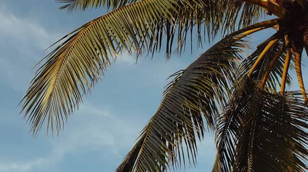 atol : Tall palm trees against the sky. Tropical landscape