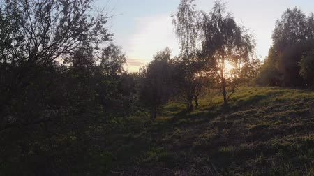 oak : Trees in the Park in the evening. Sunlight through the treetops, Stock Footage