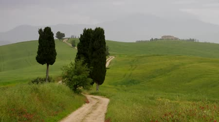 kırsal : Tuscany cypress trees with track