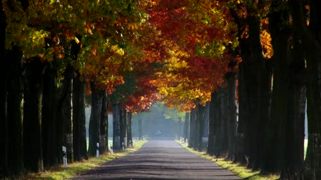 uliczka : avenue in fall