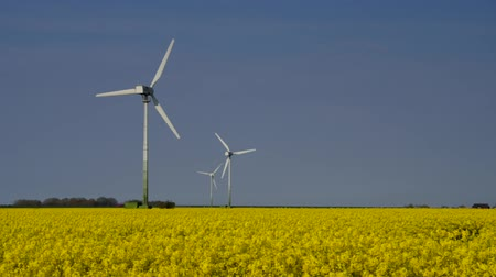 türbin : Wind turbine rape field