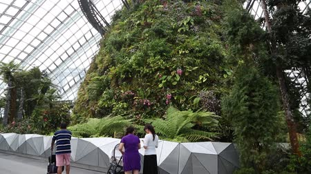 premier : SINGAPORE - JANUARY 27, 2015: The conservatory Cloud Forest is located on the territory Park Gardens by the Bay. Park is intended to become Singapores premier urban outdoor recreation space. Stock Footage