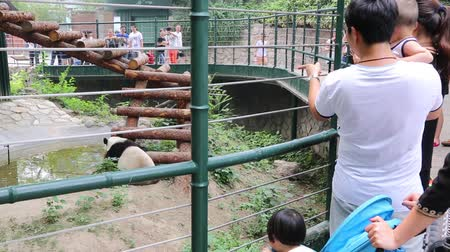 pekin : BEIJING - CIRCA JUNE, 2015: Visitors at the Beijing Zoo enclosure with giant pandas. Beijing Zoo is basically wild and rare animals in China. Stok Video