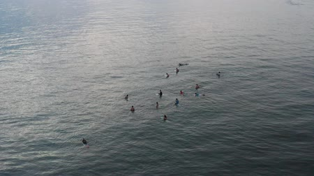 An aerial view of surfers waiting for a wave in the ocean on a clear day. Aerial view of surfer on huge Indian ocean wave. Surfers on the beach top view Wideo