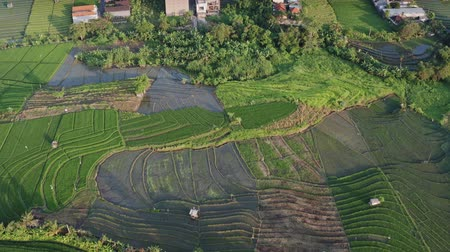 Green rice terrace and agricultural land with crops. farmland with rice fields agricultural crops in countryside Indonesia,Bali, aerial view Stock Footage